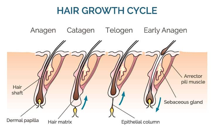 Tips On How To Use Derma Roller For Hair Loss At Home