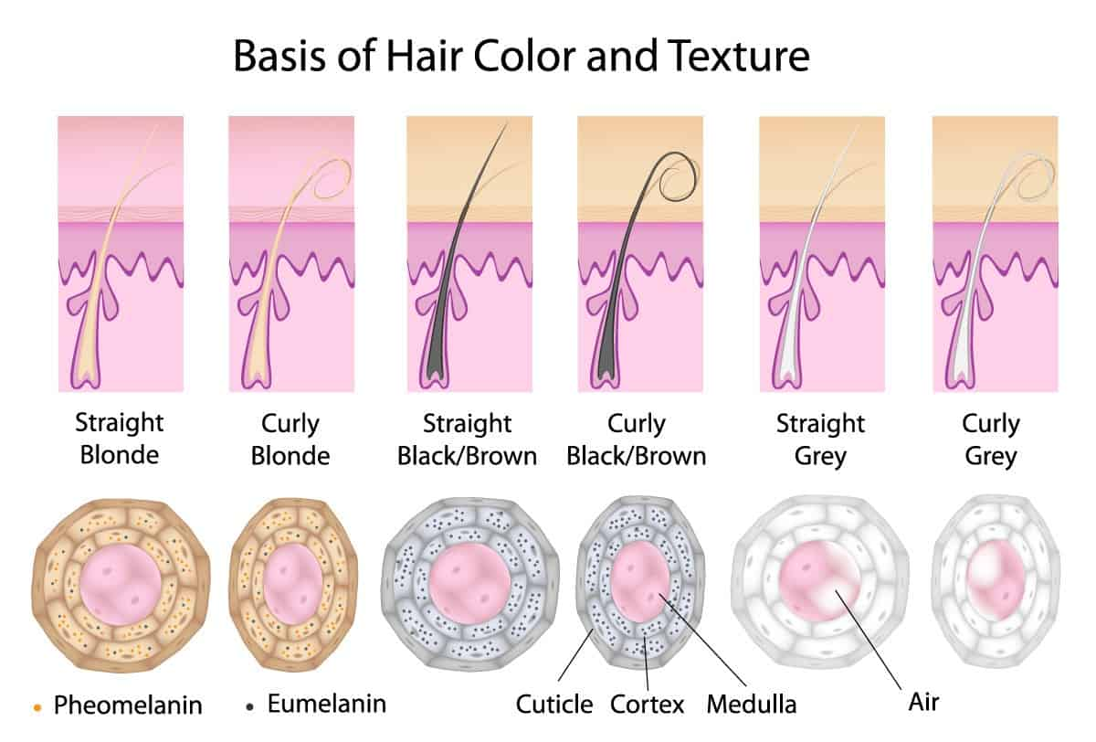 cross section of all hair type