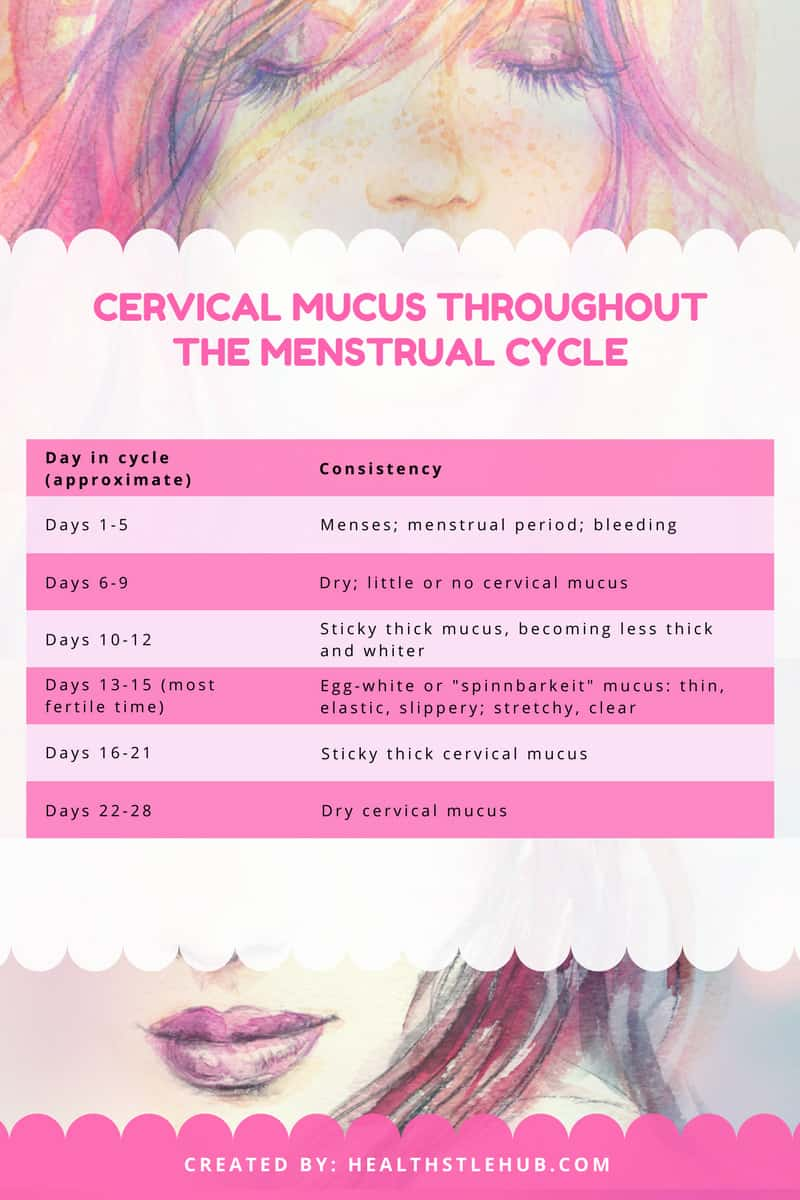 cervical mucus throughout the menstrual cycle