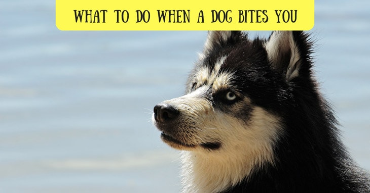what to do when dog bites